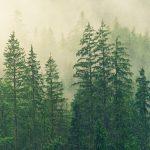 ¿Qué son y por qué son importantes las etiquetas ambientales?